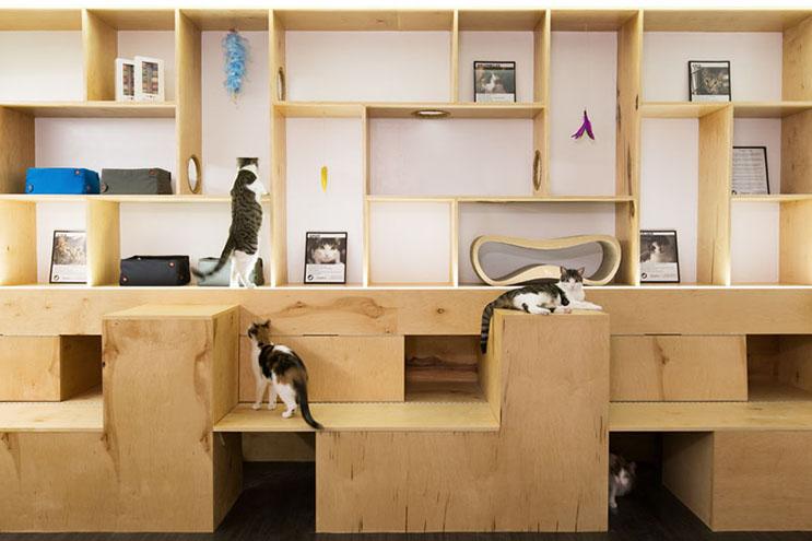 Esta cafetería te permite disfrutar de tu bebida caliente favorita al lado de gatos 5