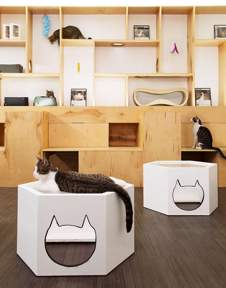 Esta cafetería te permite disfrutar de tu bebida caliente favorita al lado de gatos 7
