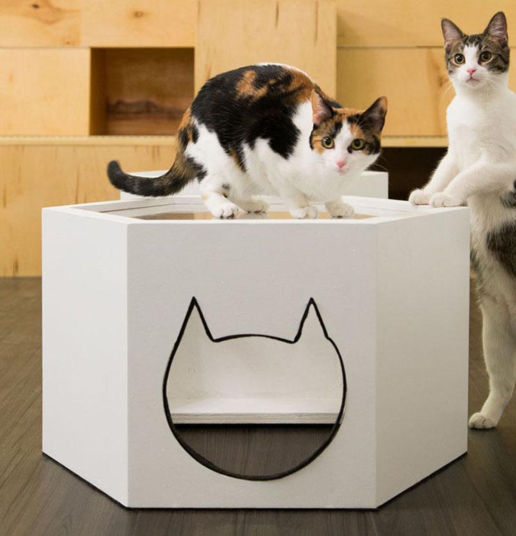 Esta cafetería te permite disfrutar de tu bebida caliente favorita al lado de gatos 8