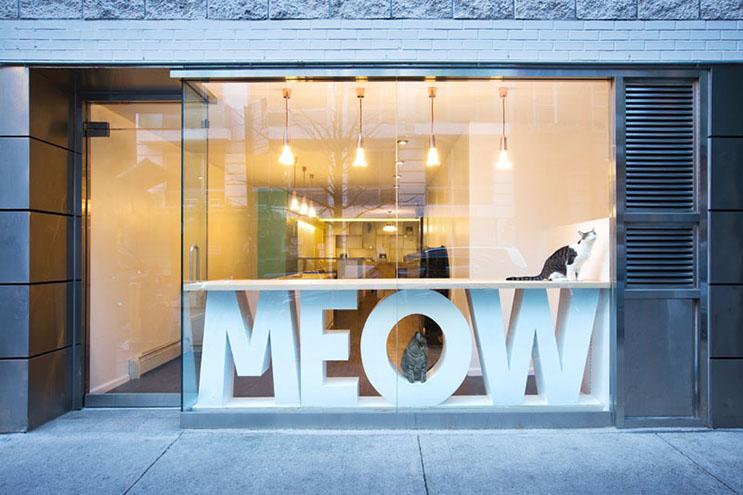 Esta cafetería te permite disfrutar de tu bebida caliente favorita al lado de gatos