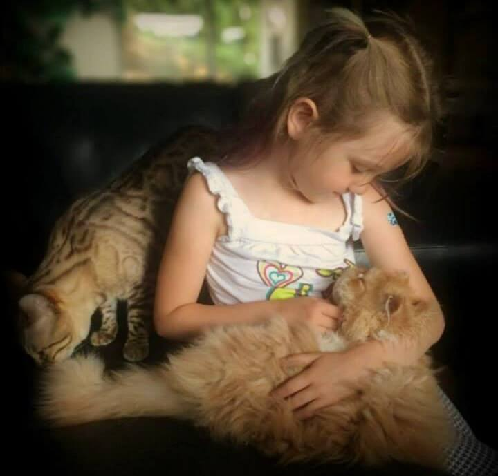 Esta niña encontró al amigo que anhelaba en este gato con necesidades especiales 03