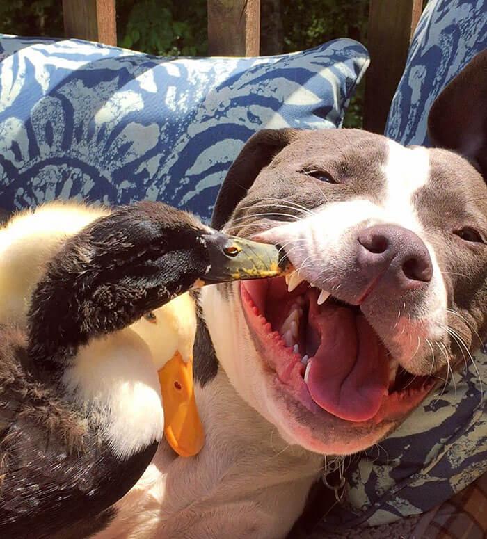 Esta pareja ha rescatado a 7 animales y ni te imaginas su adorable convivencia 3