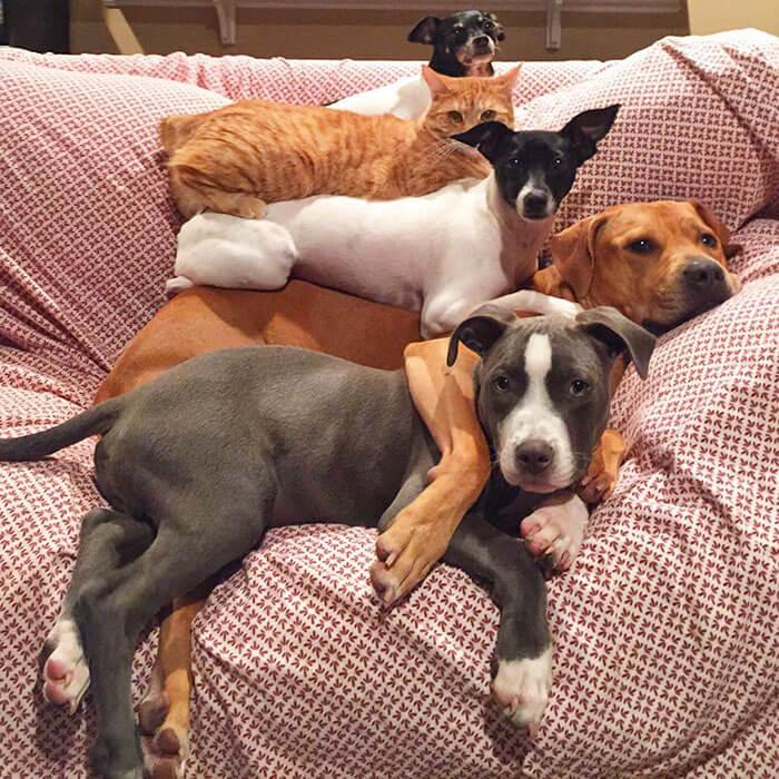 Esta pareja ha rescatado a 7 animales y ni te imaginas su adorable convivencia 5