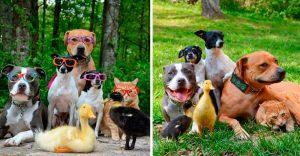 Esta pareja ha rescatado a 7 animales y tienen una adorable convivencia