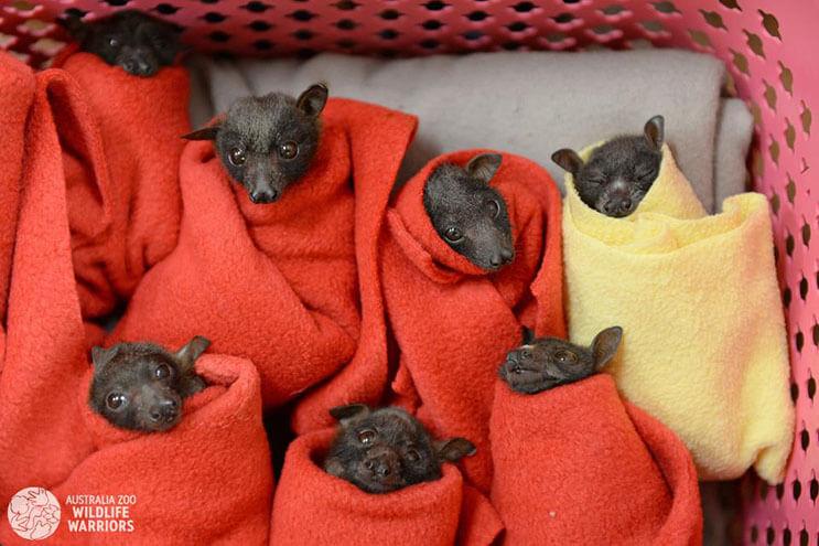 Esta rescatista evita que una camada de murciélagos tengan un trágico final 2