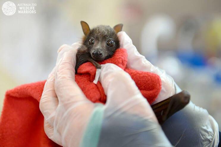 Esta rescatista evita que una camada de murciélagos tengan un trágico final 4