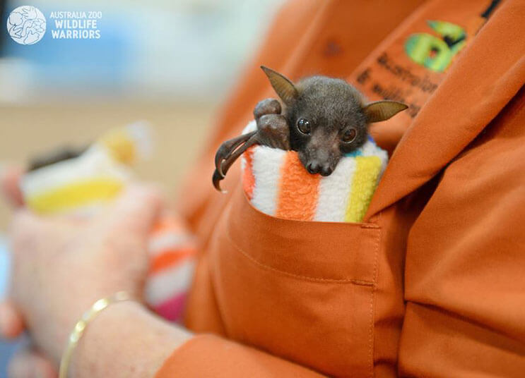 Esta rescatista evita que una camada de murciélagos tengan un trágico final 5