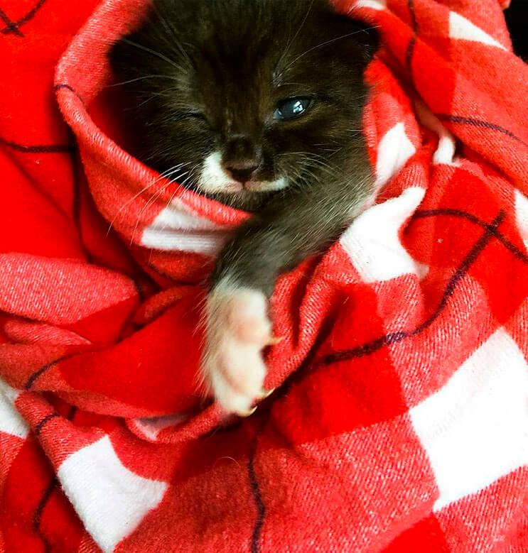 Esta tierna gatita luchadora venció a la muerte 2