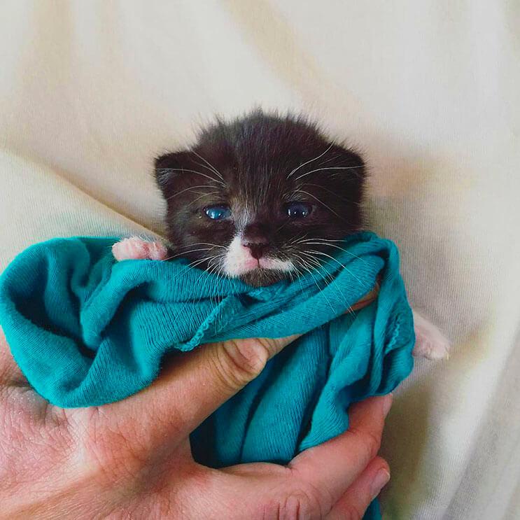 Esta tierna gatita luchadora venció a la muerte 3