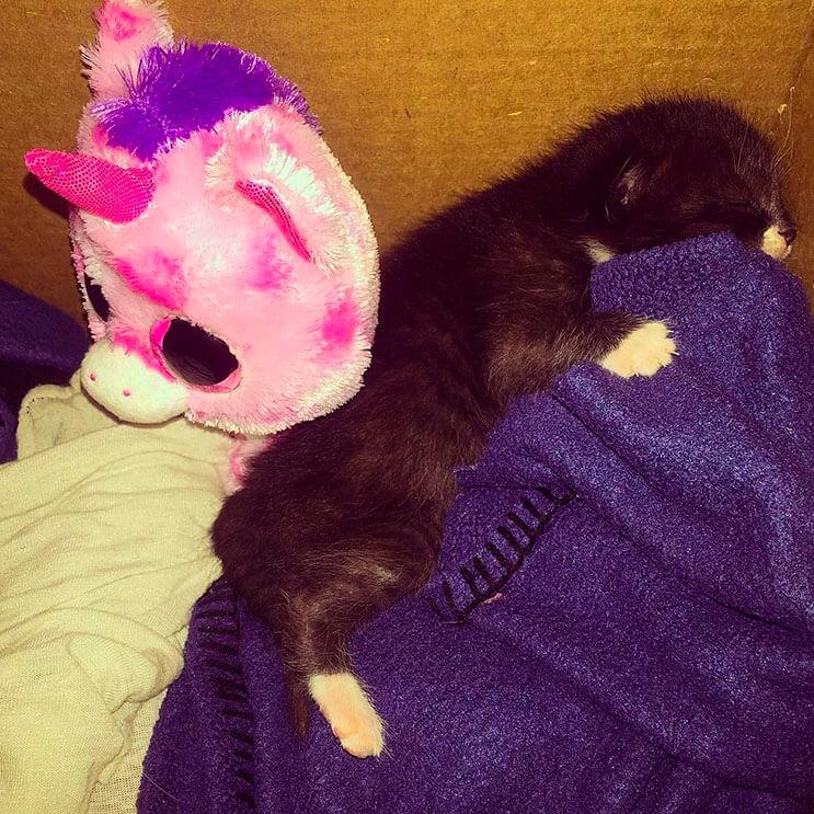 Esta tierna gatita luchadora venció a la muerte 4