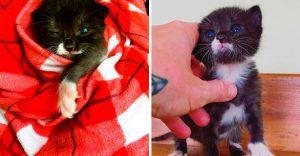 Esta tierna gatita luchadora venció a la muerte