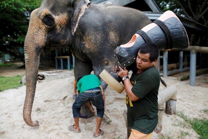 Este elefante perdió su pierna por acciones humanas pero estas personas hicieron que vuelva a caminar 05
