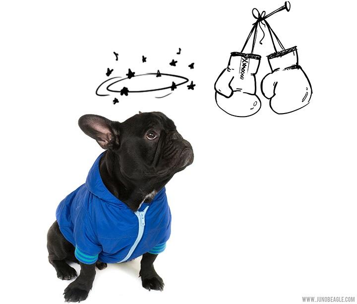 Este lindo Beagle vive las más grandes aventuras en esta serie de doodles animados boxeador