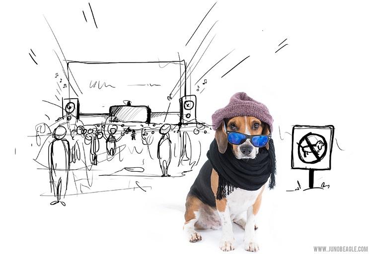 Este lindo Beagle vive las más grandes aventuras en esta serie de doodles animados concierto