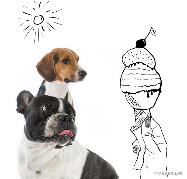 Este lindo Beagle vive las más grandes aventuras en esta serie de doodles animados helado