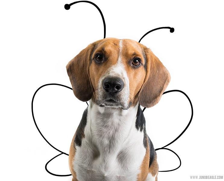 Este lindo Beagle vive las más grandes aventuras en esta serie de doodles animados mariposa