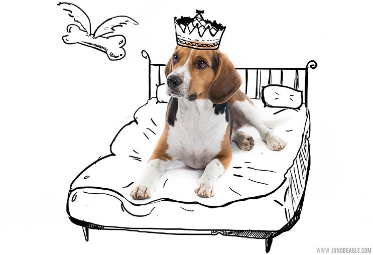 Este lindo Beagle vive las más grandes aventuras en esta serie de doodles animados rey