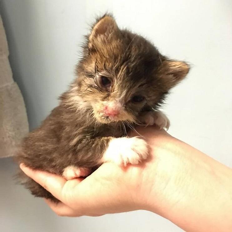 Este pequeño gato luchó contra su enfermedad y logró vencerla 03