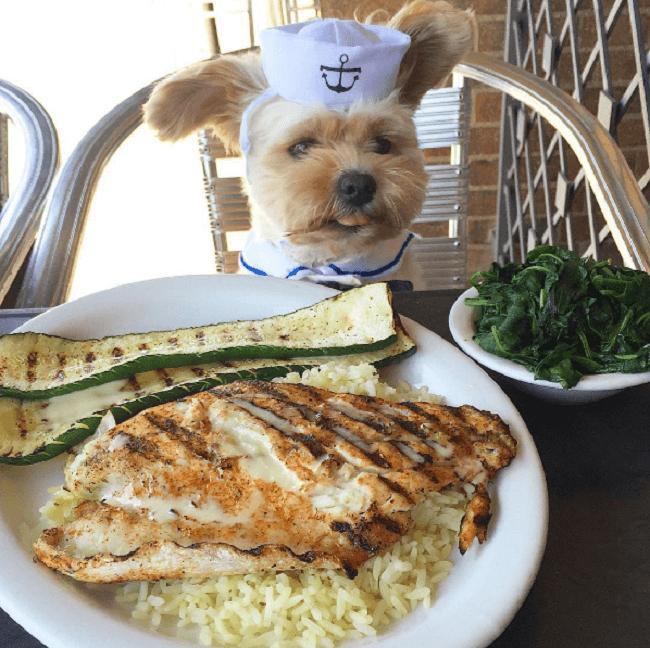Este perro es un comelón y se ha convertido en toda una sensación en Instagram 01