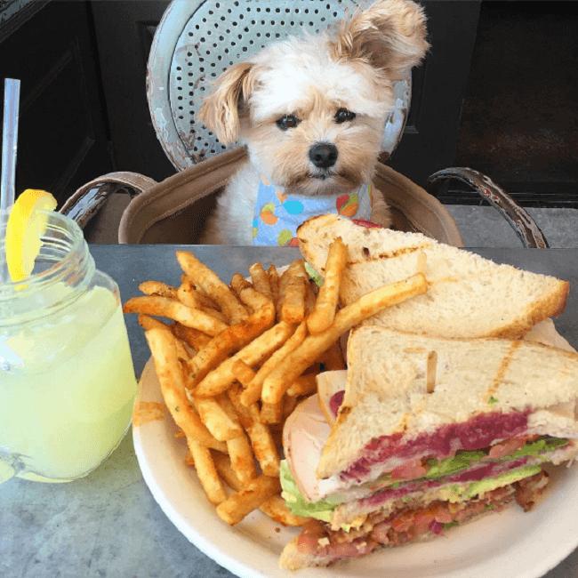 Este perro es un comelón y se ha convertido en toda una sensación en Instagram 03