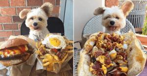 Este perro es un comelón y se ha convertido en toda una sensación en Instagram