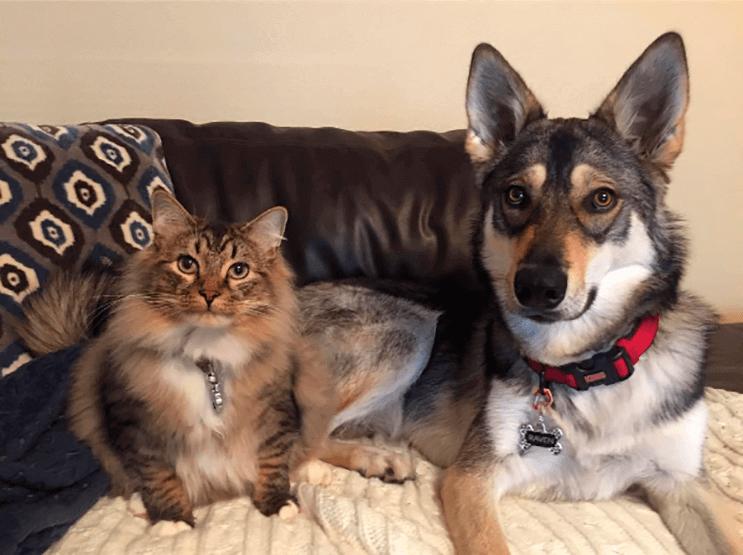 Este perro se rehúsa a abandonar el refugio donde está por no separarse de su amigo gato 3