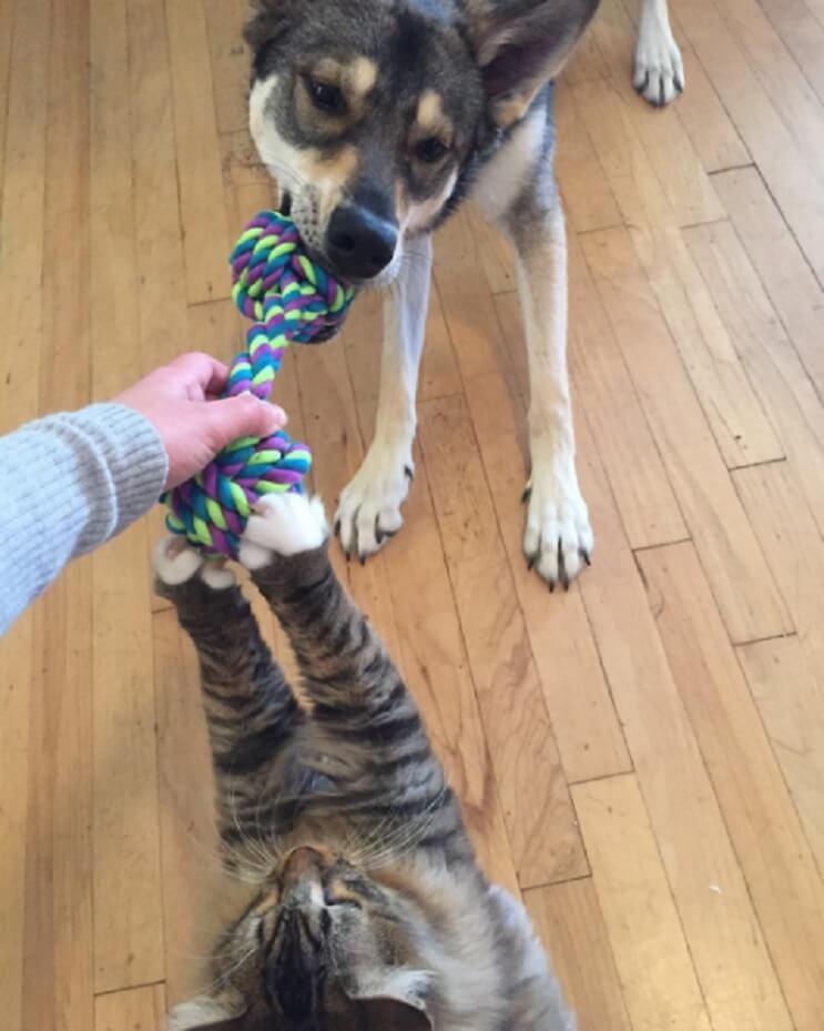 Este perro se rehúsa a abandonar el refugio donde está por no separarse de su amigo gato 9