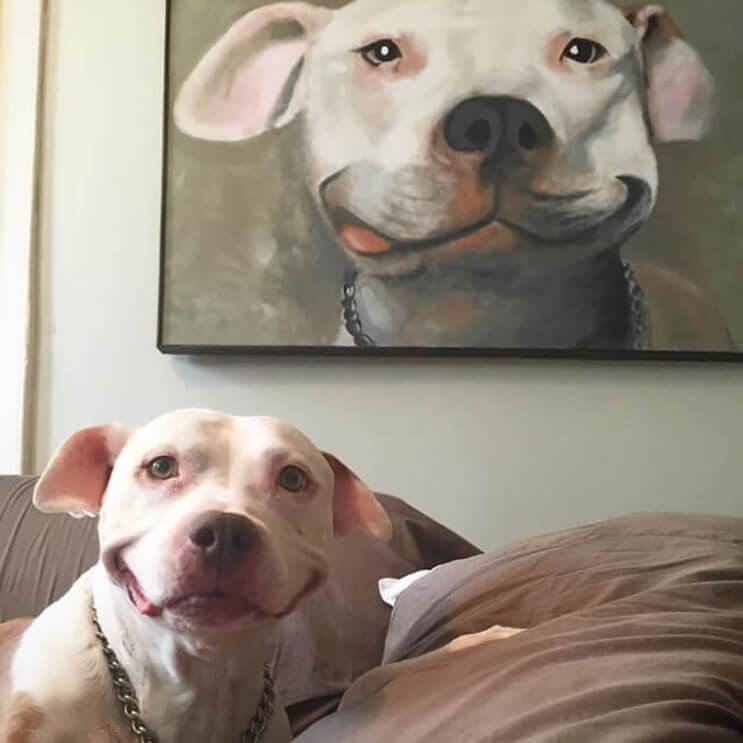 Este pitbull muestra lo feliz que está de tener un nuevo hogar 2