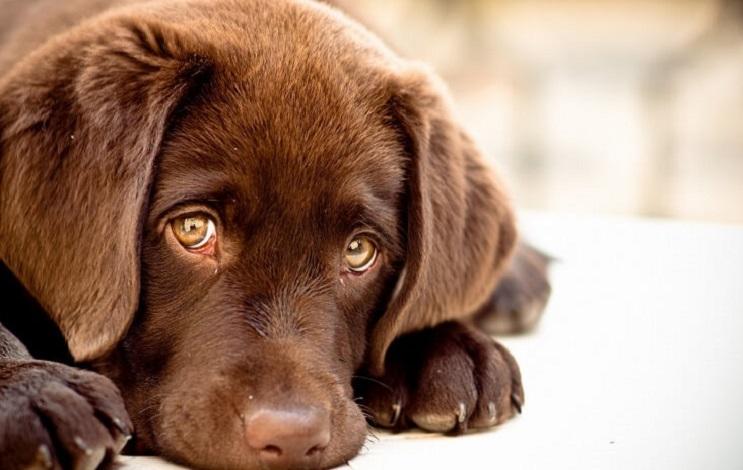 Esto es lo que realmente pasa cuando los perros lloran 003