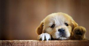 Esto es lo que realmente pasa cuando los perros lloran