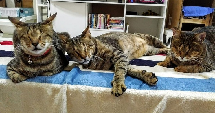 Estos tres gatos son capaces de ver a través del corazón 01
