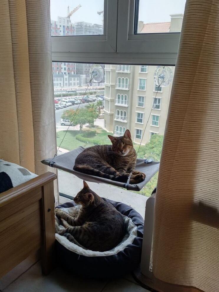 Estos tres gatos son capaces de ver a través del corazón 02