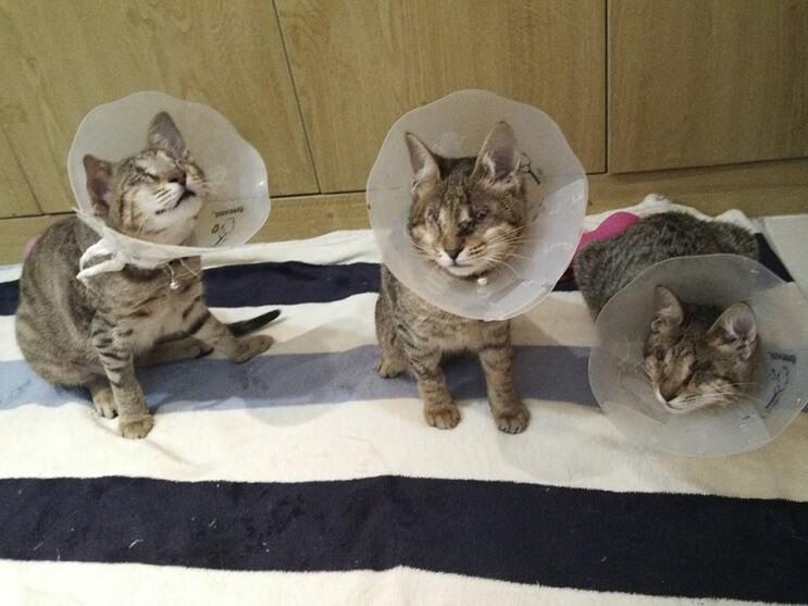Estos tres gatos son capaces de ver a través del corazón 07