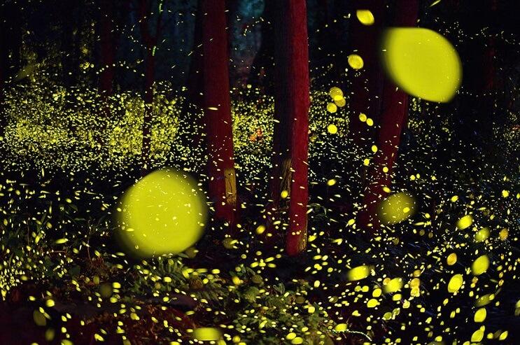 Fabulosas fotografías de luciérnagas que invaden Japón durante el verano 02