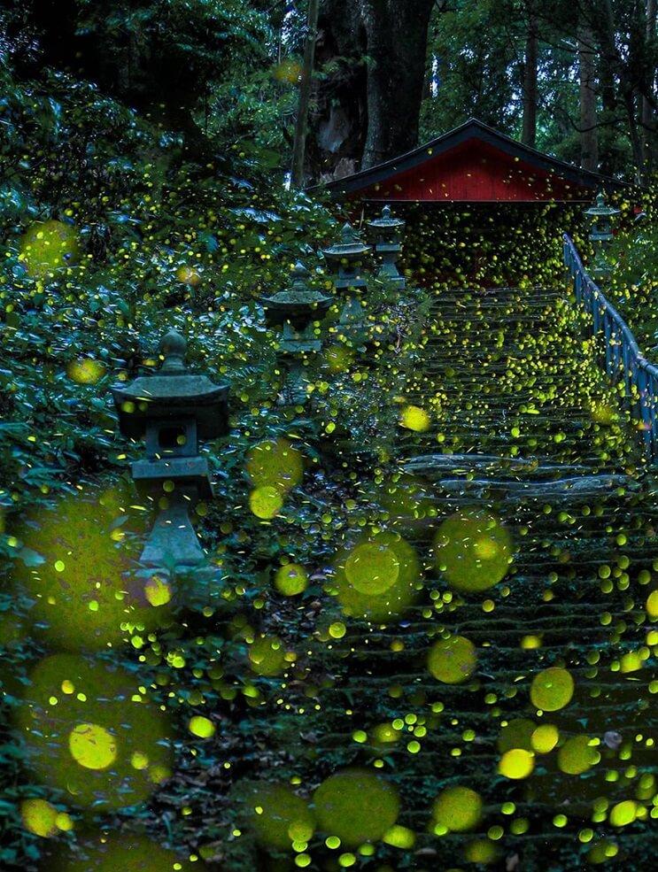 Fabulosas fotografías de luciérnagas que invaden Japón durante el verano 07