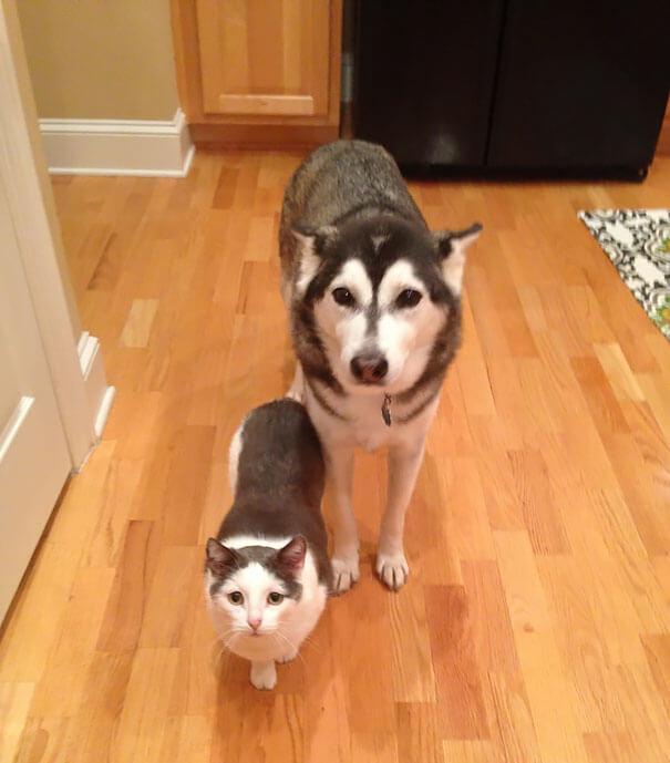 Fotografías de animales que parecen ser hermanos de otras madres 05