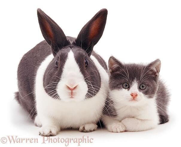 Fotografías de animales que parecen ser hermanos de otras madres 07