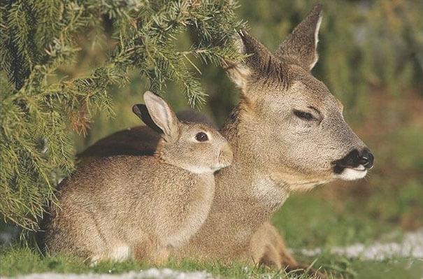 Fotografías de animales que parecen ser hermanos de otras madres 08