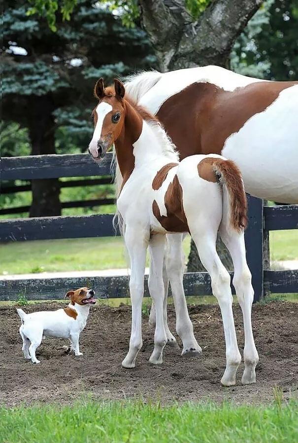 Fotografías de animales que parecen ser hermanos de otras madres 10