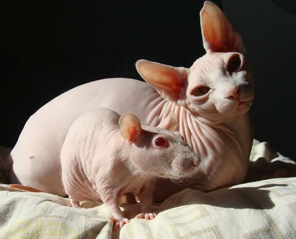 Fotografías de animales que parecen ser hermanos de otras madres 12