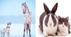 Fotografías de animales que parecen ser hermanos de otras madres