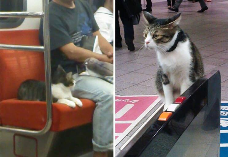 Gato toma el tren en Japon (2)