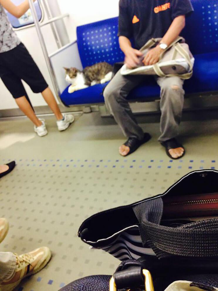 Gato toma el tren en Japon 3