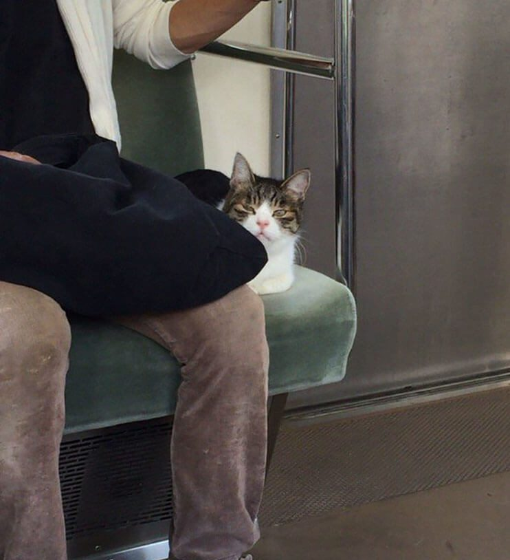 Gato toma el tren en Japon 4
