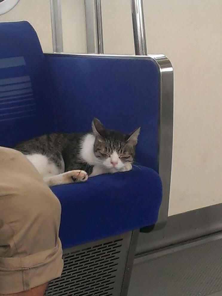 Gato toma el tren en Japon 7