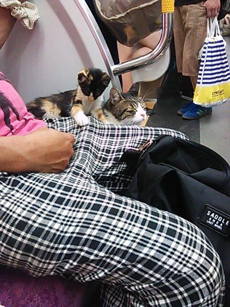 Gato toma el tren en Japon 9