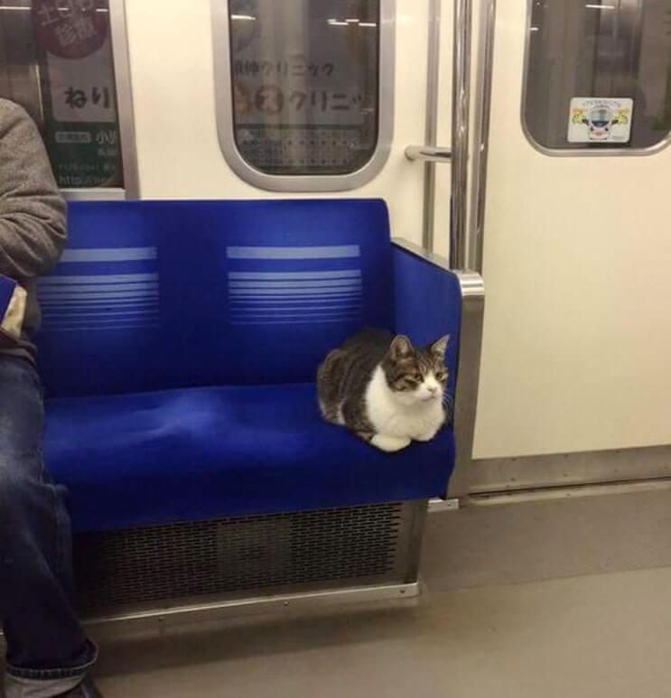 Gato toma el tren en Japon