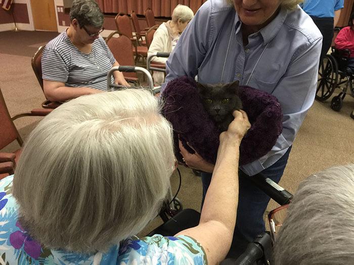 Increíble iniciativa que lleva amor a los adultos mayores a través de gatos adultos 06