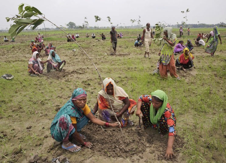 India rompe record al plantar 50 millones de arboles 2