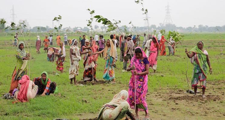 India rompe record al plantar 50 millones de arboles